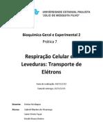 Relatório 7 Bioquimica