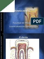 Conceptos Fundamentales an Dent