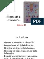 La pdf de cascada inflamacion