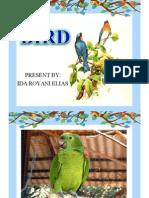 Birds.ppt