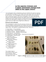 Biology A2 Coursework about Algae