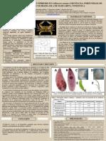 2013 X CVE - Estudio Sobre Parasitismo y Epibiosis en Callinectes Ornatus