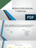 reproducciòn sexual y asexual.pdf