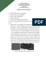 Halobacterium Salinarum MMD047 ( Alkalophylic Amylase  )