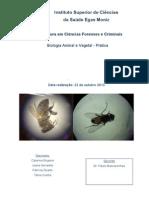 3º Relatório - Biologia Animal e Vegetal - Prática