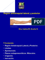 Region Antebraquial Lateral y Posterior