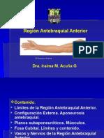Región Antebraquial Anterior