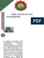 DIAPOSITIVAS YUCA.pptx