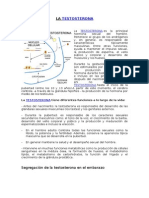 LA TESTOSTERONA.docx