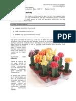 Mi Plantita Cactus