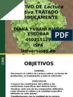 Cultivo de Lactuca Sativa Tratado Quimicamente