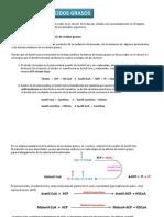 BIOSINTESIS_DE_ACIDOS_GRASOS_Y_DE_TRIACILGLICERIDOS.pdf