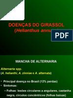Girassol.ppt
