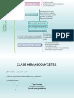 10.2 - Ascomycetes HEMI