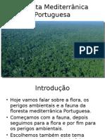 floresta mediterranica