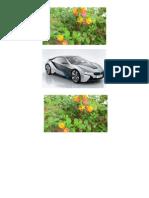 Bunga Bunga Dan Kereta