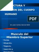 E Y F DEL CUERPO HUMANO - Musculo Del Miembro Superior