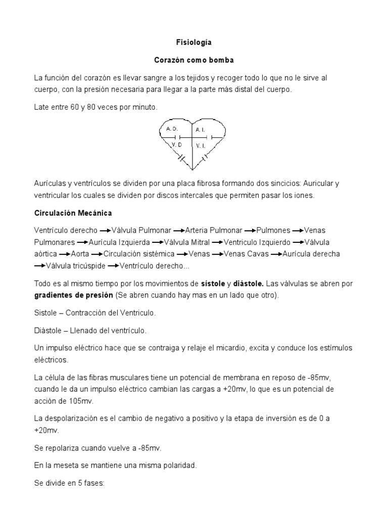 Fisiología Corazon