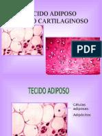 3 Tecido Adiposo Cartilaginoso