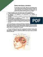 0201 Sistema Nervioso Lector