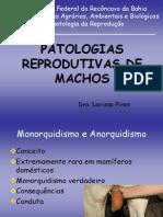 9- Patologia de Macho