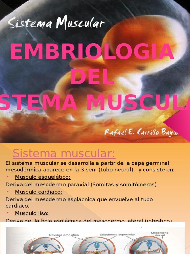 Embriologia de Sistema Muscular.terminado 2