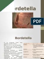 Bordetella.pptx