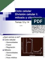 13 14 Ciclo Celular. Mitosis