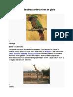 Răspândirea Animalelor Pe Glob