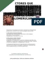 Factores Que Determinan El Daño Glomerular, Glomerulopatías