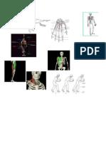 Deber Anatomia