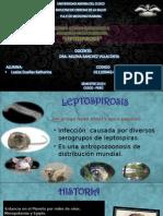 4leptospirosis-2014