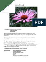 Echinacea Spp monograph