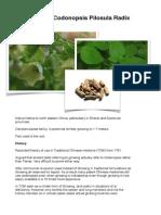 Codonopsis pilosula presentation