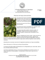 Plant as de Hojas Comestibles