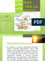 Factores Que Afectan La Fotosintesis