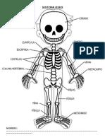 Sistema Oseo dibujo inicial