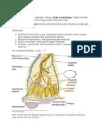 histologi bronkiolus
