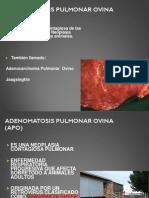 Adenomatosis Pulmonar Ovina_2014