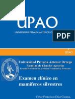 05 Examen Clinico en Mamiferos