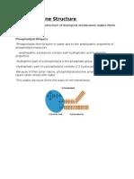 1 3 membrane structure