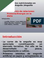 Acui 2 Requerimientos Nutricionales en Anguila[1]