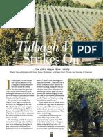 Extra Virgin Olive Oil from Oakhurst Olives, Tulbagh