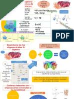 MODIFICACION de proteinas