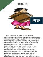 HERBARIO.pptx