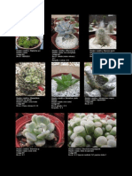 Catalogo Cactus del Pacifico-2014-04-01.pdf