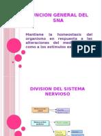 Fisiologia Del Sna