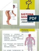 Sistema Nervioso - Anatomía