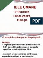 Gene Umane