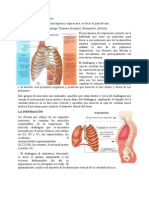 mecanismos respiratorios